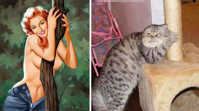 Foto:catsthatlooklikepinupgirls