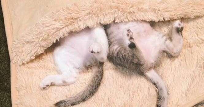 Esses dois gatinhos tomaram conta do aquecedor de pés que seu dono comprou