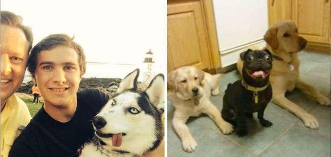 Cães que não conseguiram ser fotogênicos