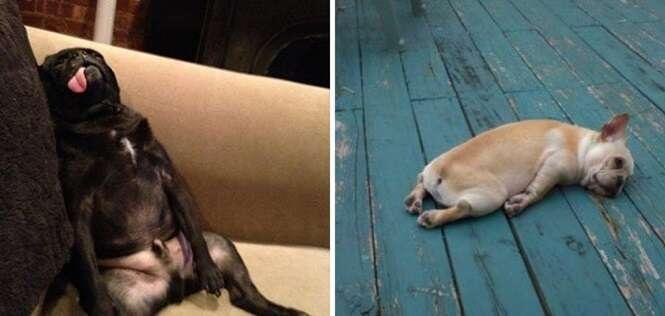 Imagens de cães mostrando como você fica no dia em que está de folga