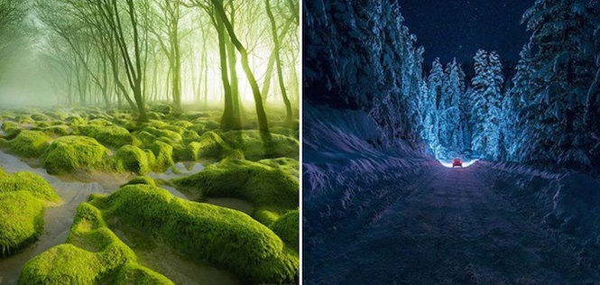 As florestas mais misteriosas do planeta onde você nem se importaria em se perder