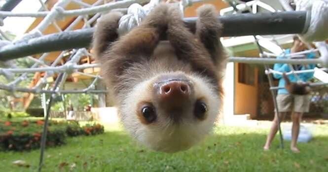 """Vídeo: assista a duas preguicinhas """"falando"""" e tente não sorrir"""