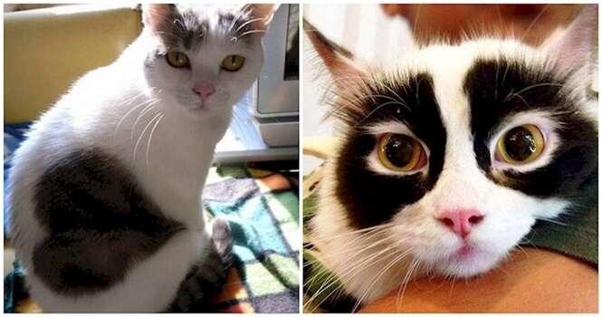 Lindos gatos com pelagem incomum
