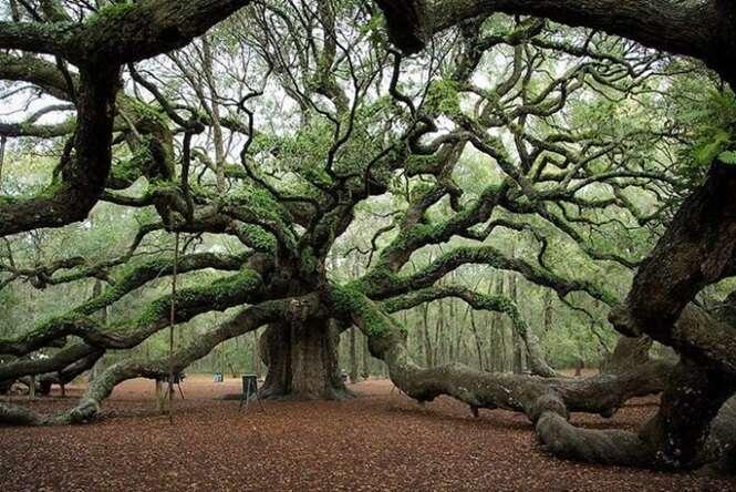 Árvores que não parecem ser desse mundo