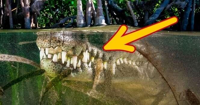 Criaturas que são dos tempos dos dinossauros