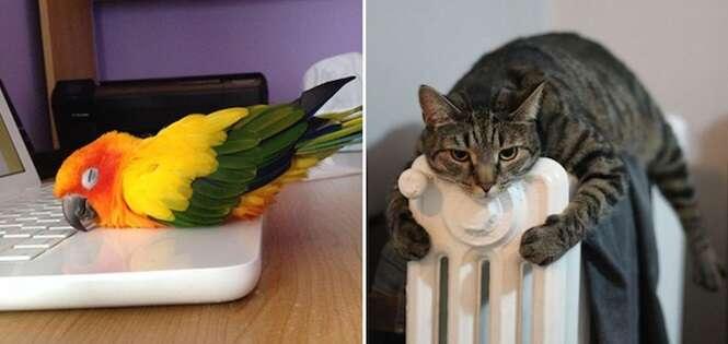 Animais procurando uma maneira de se aquecerem