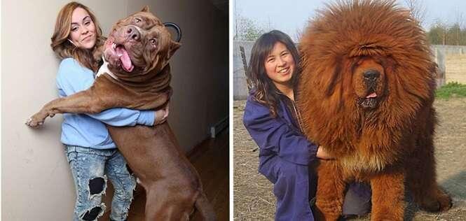 Cachorros grandes demais, mas que ainda não perceberam isso