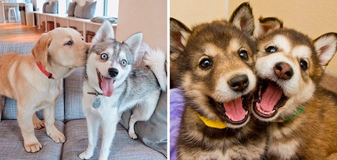 Fotos de cães que ilustram você e seu (sua) melhor e inseparável amigo (a)