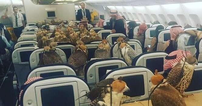 Alguém comprou 80 assentos de avião para seus 80 falcões, e a Internet está enlouquecendo com isso