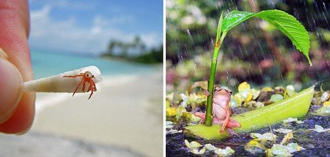 Imagens fascinantes do reino animal