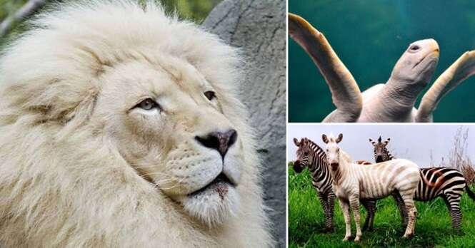 Animais que nasceram com albinismo