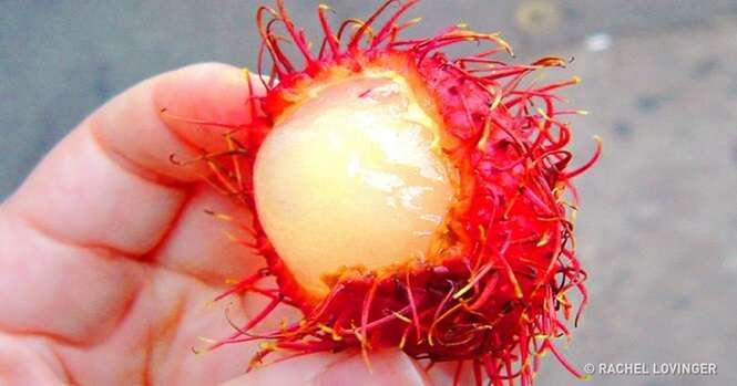 Comidas exóticas feitas ao redor do mundo que você não ficará interessado em experimentar
