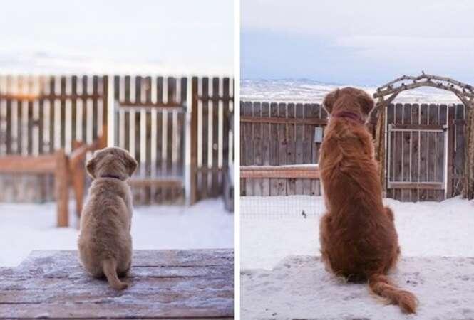 Adoráveis filhotes de cachorros que cresceram rápido demais