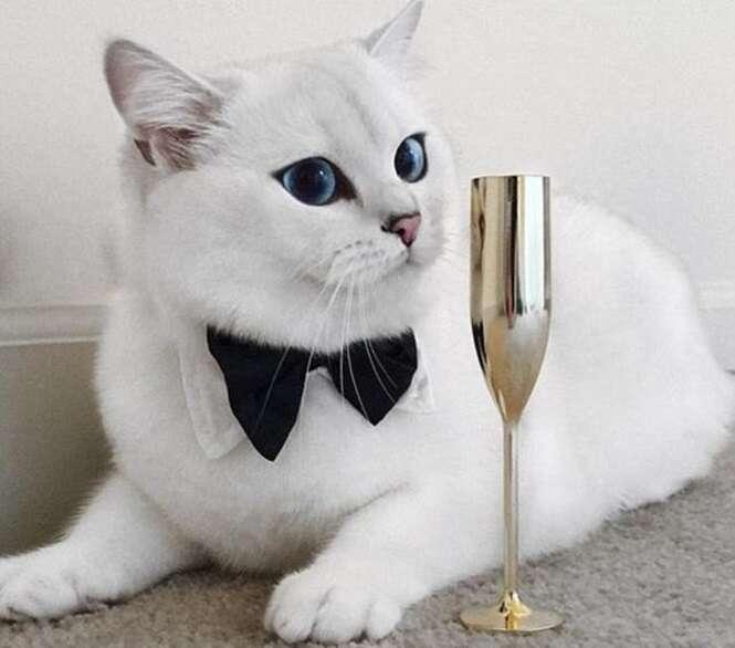 Gatos bem diferentes pelos quais você vai se apaixonar