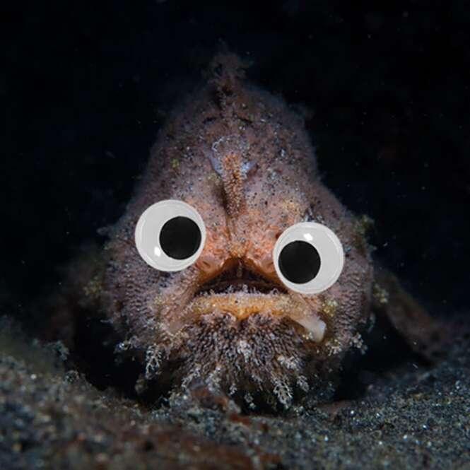 Imagens provando que qualquer criatura fica fofa com olhos esbugalhados
