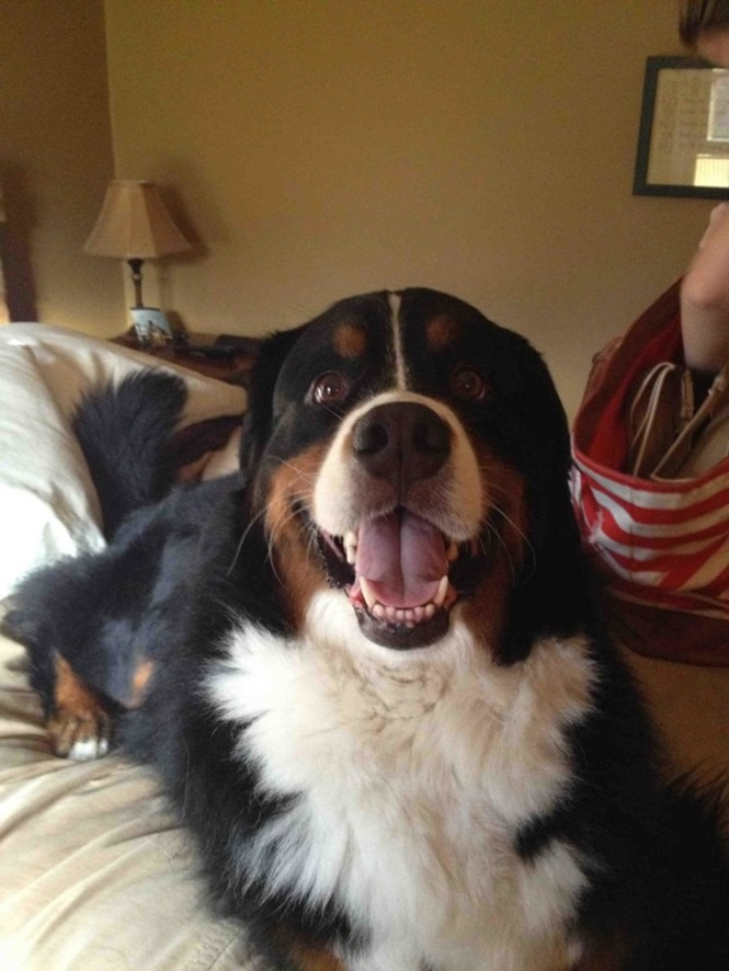 Cães felizes em verem seus donos