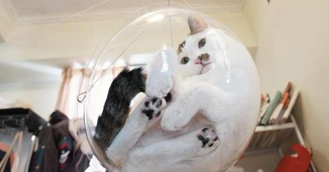 """Que tal uma """"cadeirinha"""" dessas para seu gato?"""