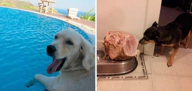 Cães que desfrutam de uma vida muito melhor que a sua