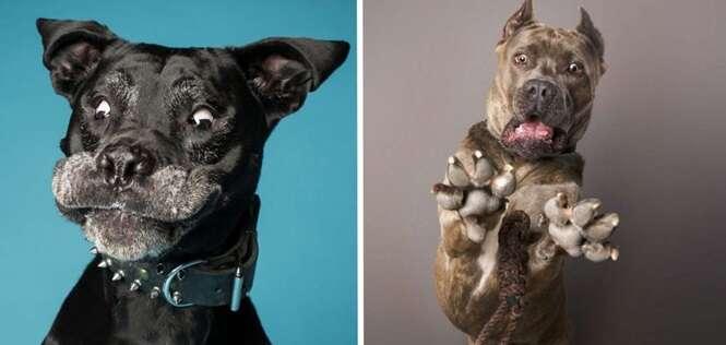 Este cara decidiu fotografar cães fazendo caretas e acabou inventando o melhor trabalho de todos