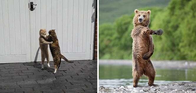 Animais que têm movimentos de dança muito melhores que os seus