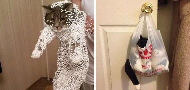 Gatos que se arrependeram amargamente das decisões que tomaram