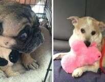 18 gatos e cachorros que não soltam seus brinquedos por nada