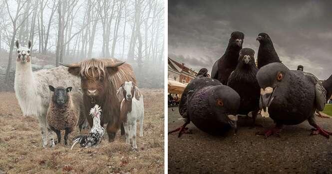 Seleção traz 20 animais que tinham plena consciência de que estavam sendo fotografados. Imagens mostram que animais também gostam de fotografia.
