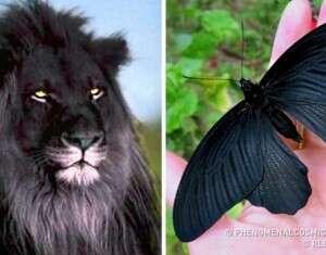 17 animais pintados com a cor da noite