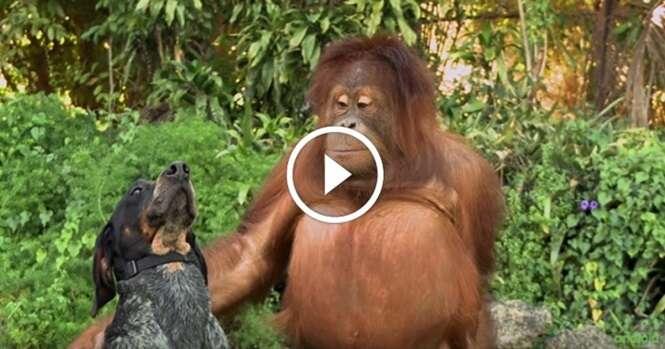 Todas as pessoas do mundo precisam assistir a este curto vídeo