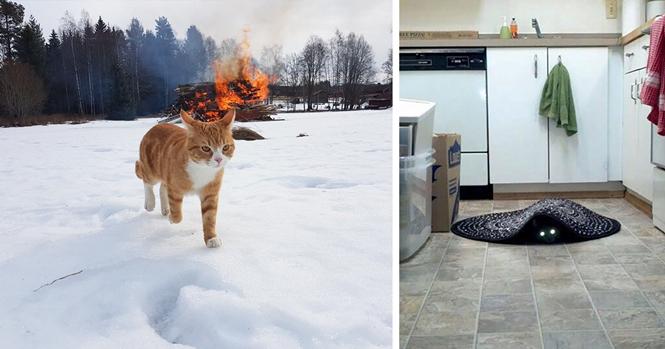 Gatos que certamente fizeram pacto com o coisa ruim