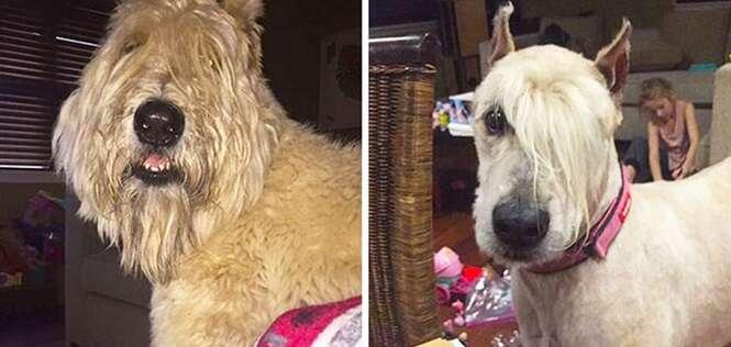 Cães que ficaram bem mais estilosos que muitas pessoas por aí após apararem os pelos