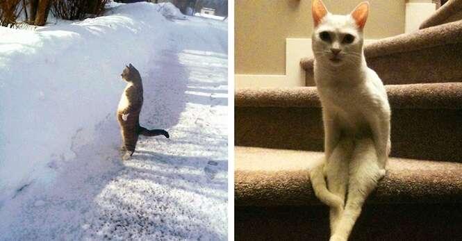 Fotos provando que os gatos são seres fora do normal