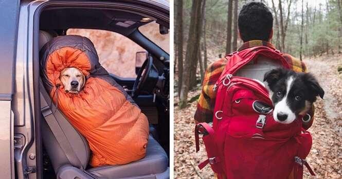 Imagens para lhe inspirar a acampar com seu cachorro