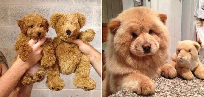 Cachorrinhos tão fofos que até parecem ursinhos de pelúcia