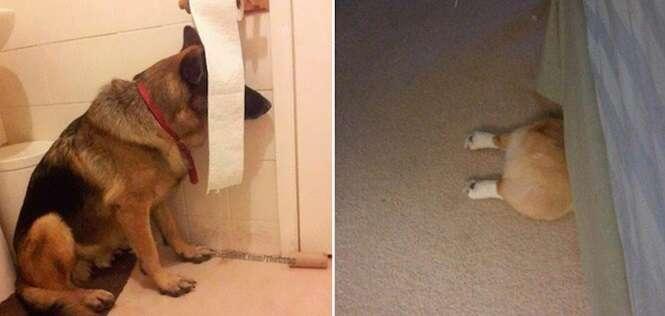 Cachorros que pensam que estão escondidos