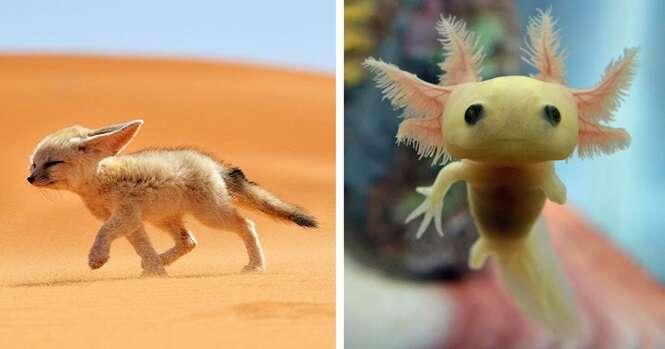 Animais raros que você provavelmente nunca viu filhotes