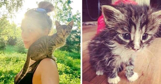 Esta jovem da Letônia resgatou mais de 350 gatos desabrigados nos últimos dois anos