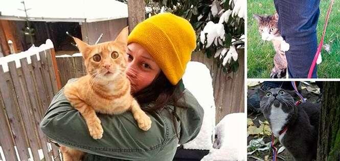 Fotos mostrando gatos assustados após saírem de casa pela primeira vez