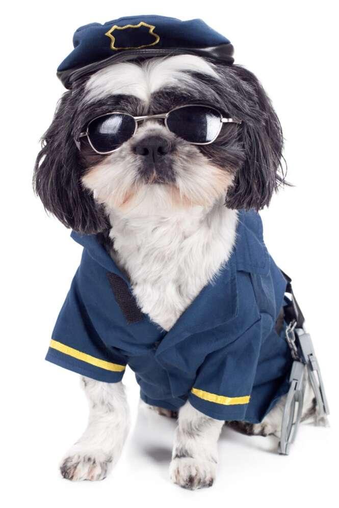 Profissões que o seu cão sabe exercer