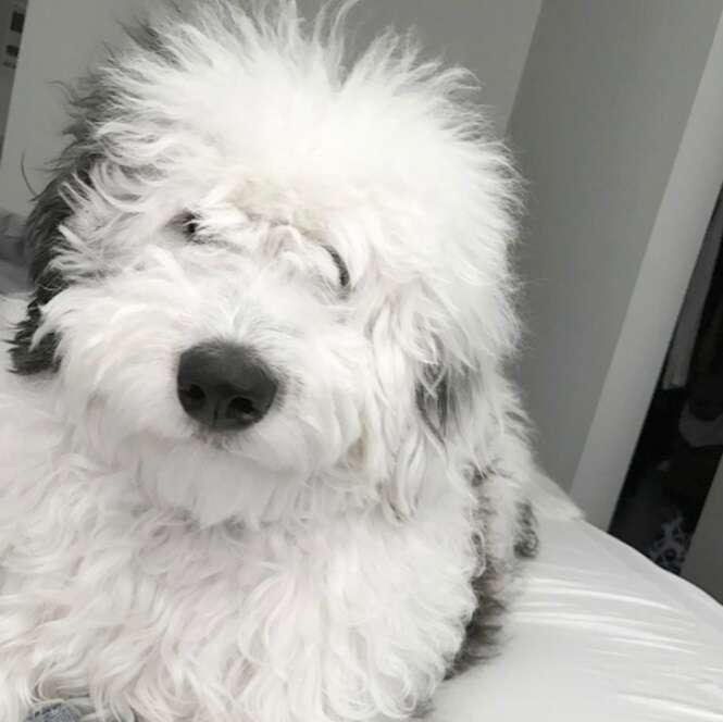 Cães fofos que gostariam de te dar um abraço