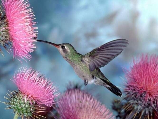 Imagens mostrando a beleza dos beija-flores