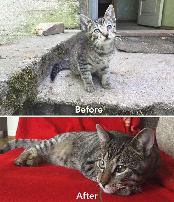 Foto:Cat Care Community