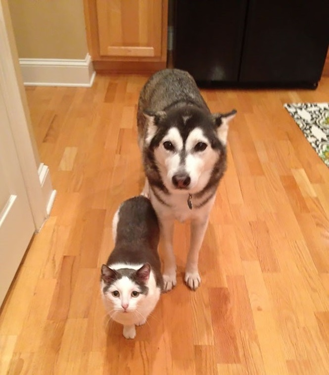 Animais que possuem irmãos gêmeos de espécies diferentes
