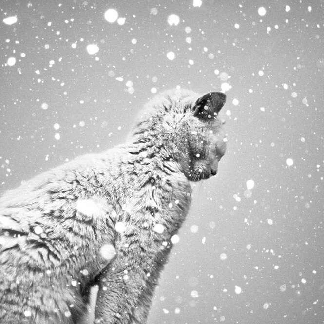 Fotos em preto e branco que vão virar seu mundo de cabeça para baixo
