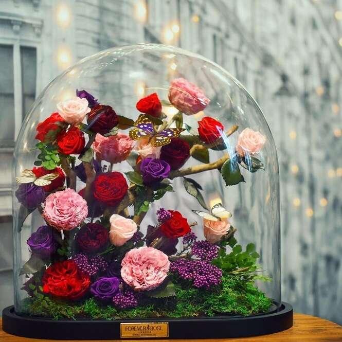 Foto:Forever rose