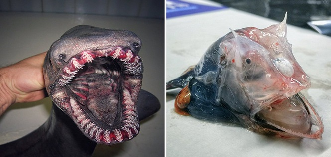"""""""Monstros marinhos"""" capturados por pescador russo"""