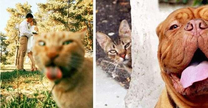 Gatinhos arruinando as fotos de seus donos