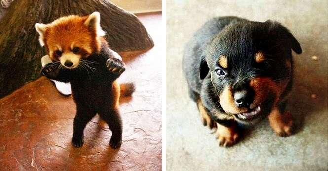 Animais adoráveis furiosos