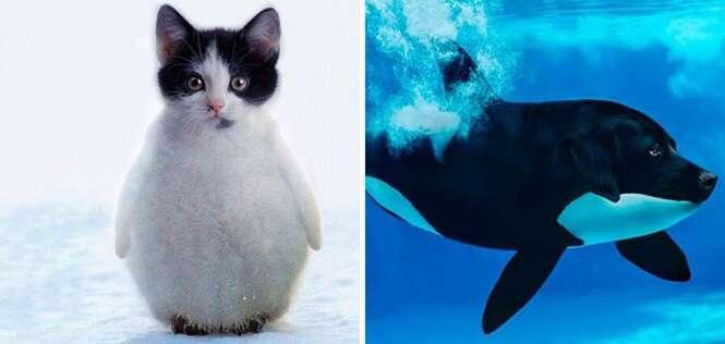 Montagens surpreendentes que tornaram animais híbridos