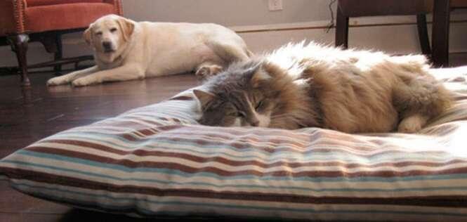 Situações engraçadas provando que os gatos mandam nos cães